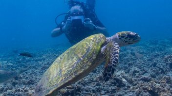 Diving & Snorkeling Trips