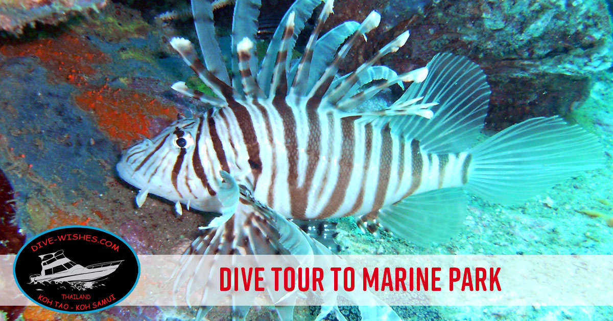 Diving and Divecourses with Dive Wishes