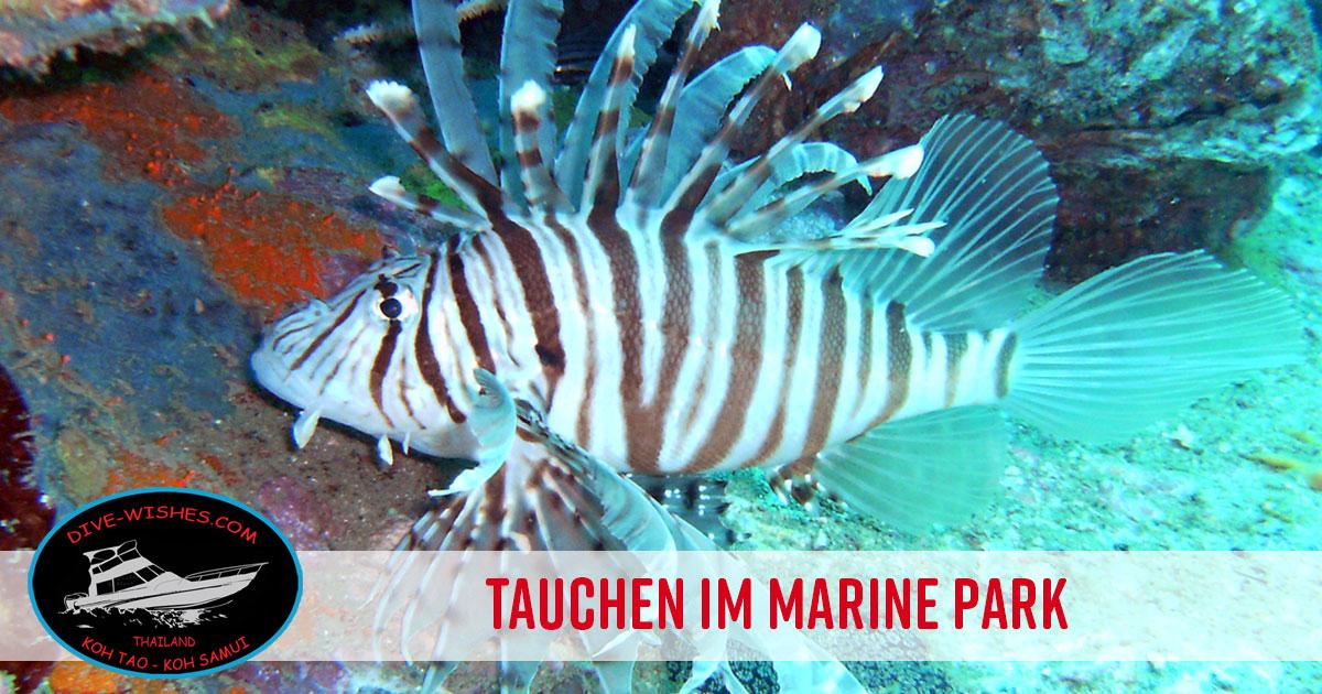 Tauchtouren Marine Park