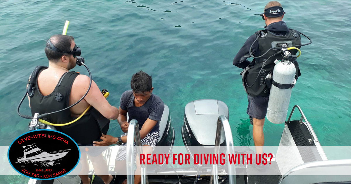 Diving with Dive Wishes & More